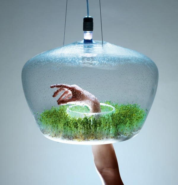 Glass Greenhouse Vegetal Pendant Lighting - pendant-lighting