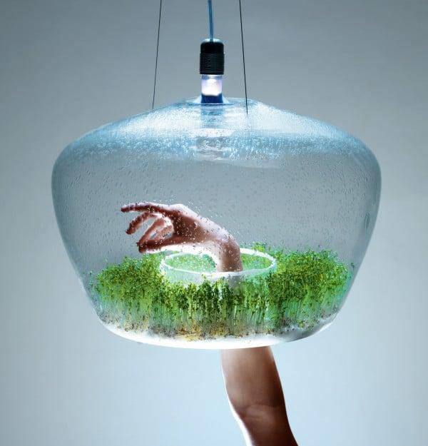 Glass Greenhouse Vegetal Pendant Lighting - pendant-lighting