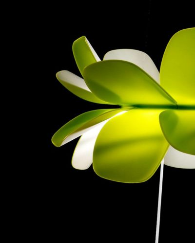 kind-of-flower-1