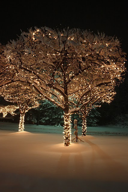 Christmas Tree Outdoor Lighting Id Lights