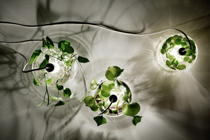 Mad Scientist Light Vegetal Kitchen Table Lamp - table-lamps