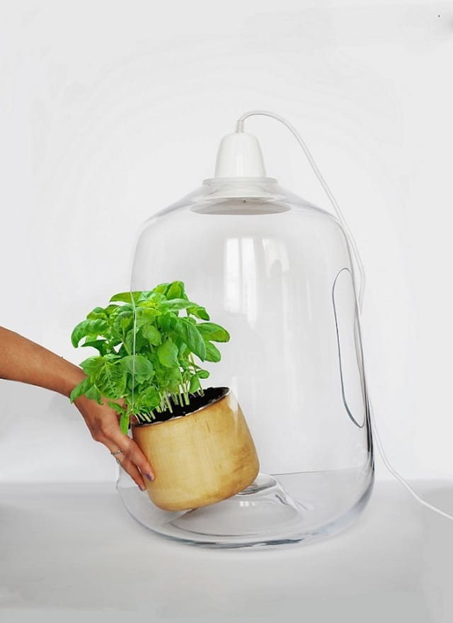 Vegetal Milo Plant Lamp - table-lamps