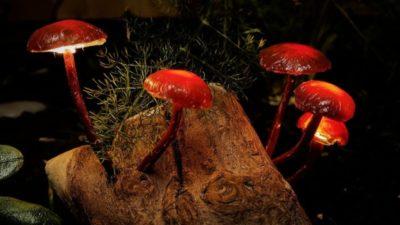 Forest Mushroom Lights