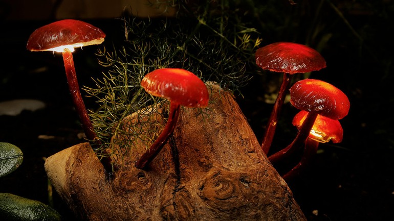 DIY Mushroom Lights with Forest Wood - wood-lamps, desk-lamps