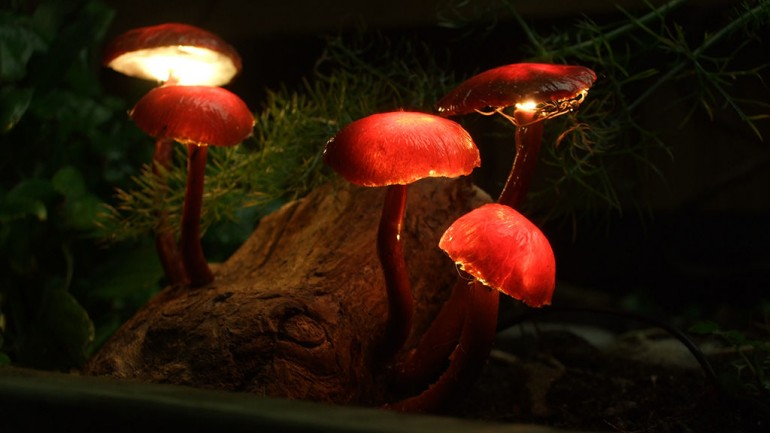 DIY Mushroom Lights with Forest Wood Desk Lamps Wood Lamps