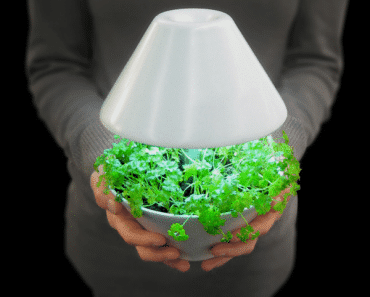 Lightpot: Lighting and Plants Symbiosis