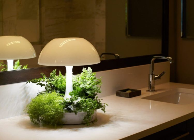Ambienta Vegetal Table Lamp - table-lamps