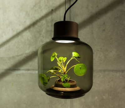 How to Grow Plants in Windowless Spaces with Lamps