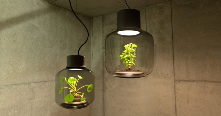 How to Grow Plants in Windowless Spaces with Pendant Lighting - pendant-lighting