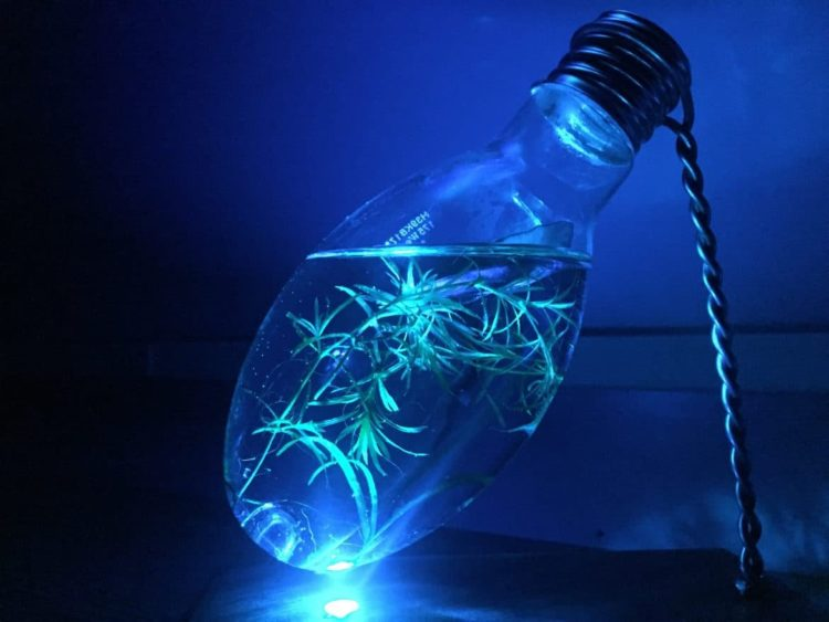 Light Bulb Aquarium Night Light Table Lamp - wood-lamps, table-lamps