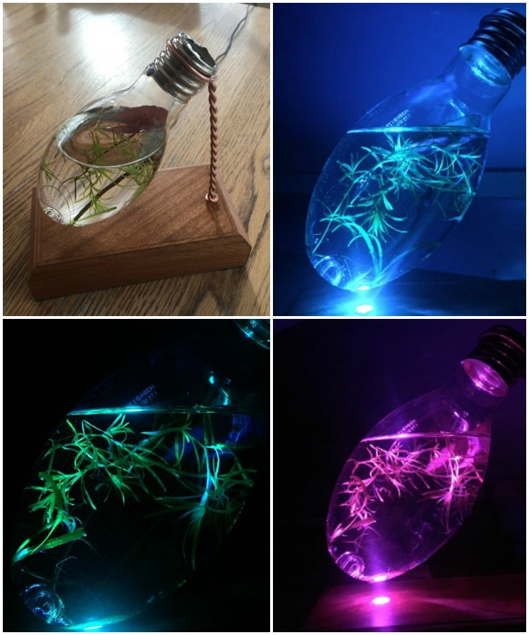Light Bulb Aquarium Night Light Table Lamp Id Lights