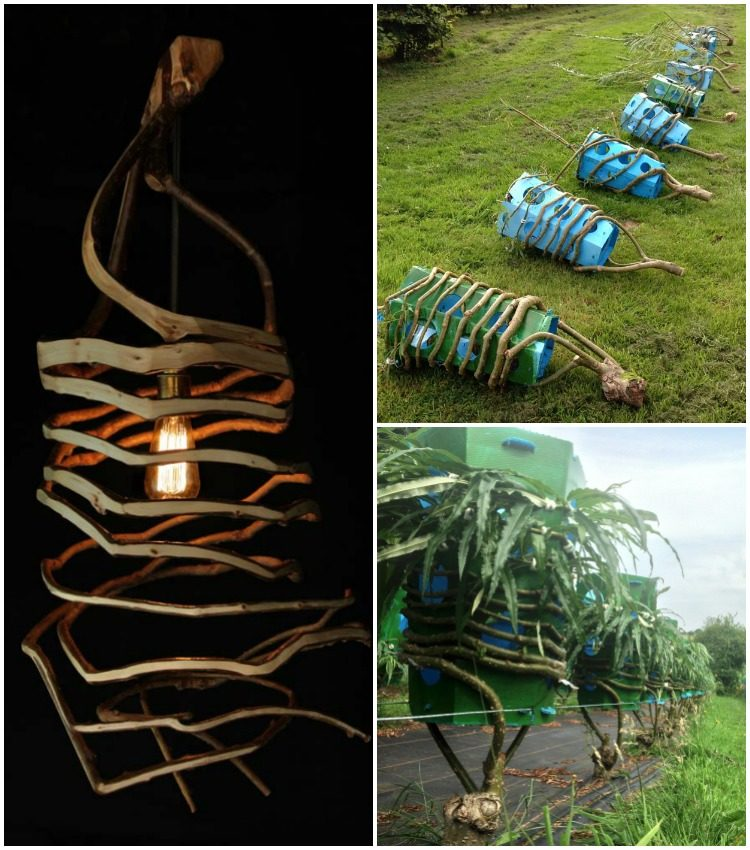 The Man Who Grows Natural Lamps