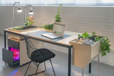 Desktoop Vegetal Desk Lamp