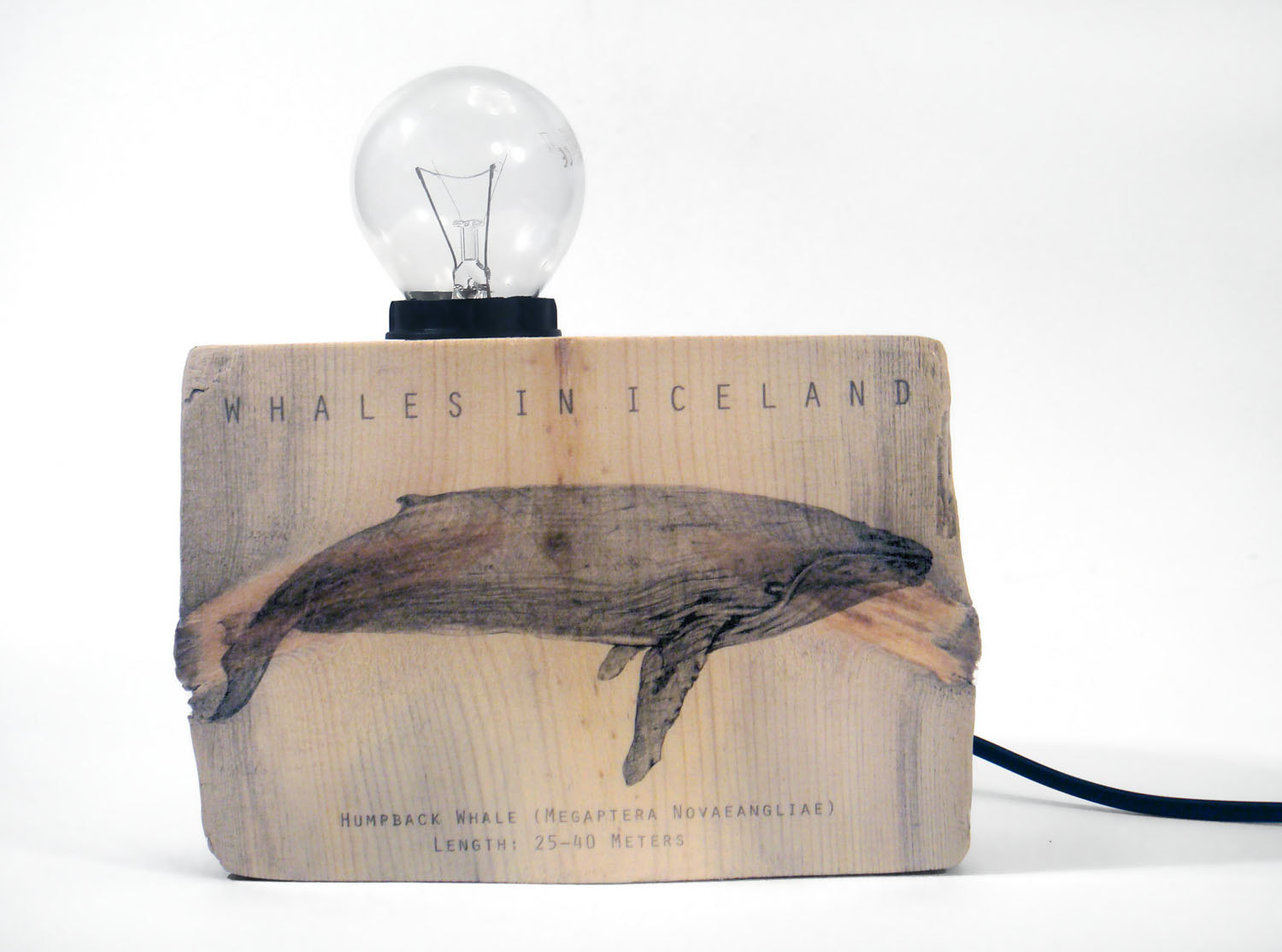 Driftwood Humpback Whale Wood lamp